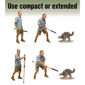 Hike 'n Strike 950,000 Volts Stun Walking Cane Showing Man Defending Against a Coyote