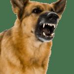 Barking Dog Image to Demonstrate Electronic Barking Dog Alarm