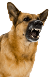 Barking Dog Image to Demonstrate Electronic Barking Dog Alarm