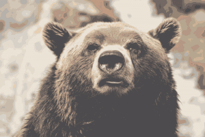 Using Bear Spray Repellent Protects Human and Bear Alike